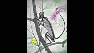 أشعة سينية ملونة لقرد في شجرة