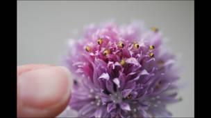 Arañitas en una flor