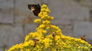 Бабочка и пчелы