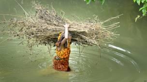 जलाने के लिए लकड़ियां लेकर जाती एक बुजुर्ग महिला