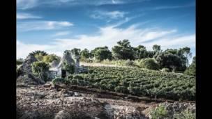 """Edificios """"trulli"""", típicos de Puglia, Italia"""