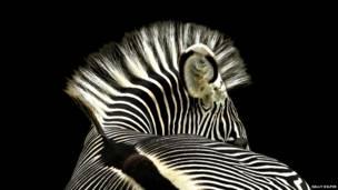 Zebra, de Sally Kilpin.