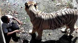 படித்ததில் வலித்தது!!  140923145320_tiger_kills_a_man_in_delhi_304x171_bbc_nocredit