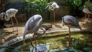 थाईलैंड, चिड़ियाघर