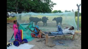 किसान परिवार, मच्छरदानी, डिम्पल पंचोली