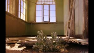 टूटा मकान, पौधा