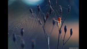 मकड़ी,क्रैसीमीर मातारोव