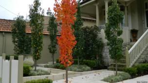 Осенние деревья в Сиднее