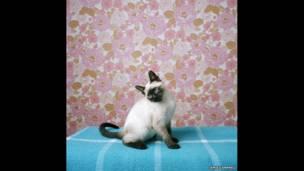 """""""Би в старой комнате Аниты"""", 2009 год."""