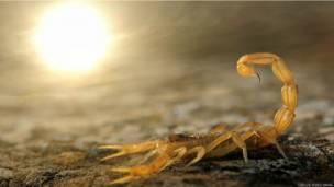 Imagem de relâmpagos ganhou na categoria ambientes da Terra; foto de leoas venceu na categoria geral.