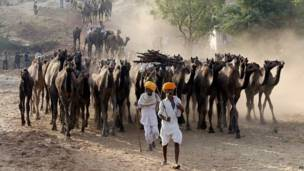pushkar camel fair, पुष्कर ऊँट मेला