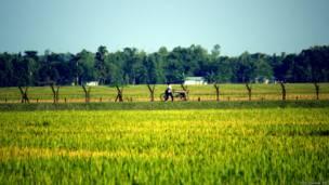 भारत-बांग्लादेश सीमा, पश्चिम बंगाल