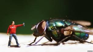 Человек и крупная муха