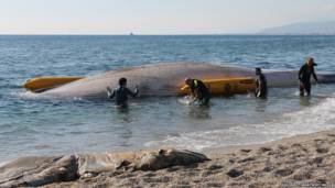 Giant Whale Carcass PHOTOGRAPH BY Equinac / Barcroft Media