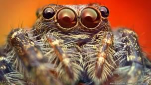 пауки вблизи