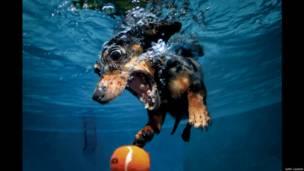 Por acidente, americano descobriu um novo ângulo para retratar animais. | Foto: Seth Casteel