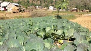 Овощная ферма