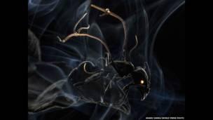 एक चींटी की तस्वीर, आनन्द वर्मा की तस्वीर