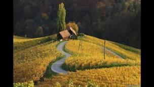 Slovenya'da üzüm bağları, Albert Ceolan