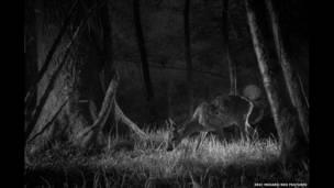 Fotógrafo registra o que os animais fazem à noite