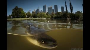 Matthew Smith usa domo especialmente construído para capturar fotos acima e abaixo da superfície da água ao mesmo tempo