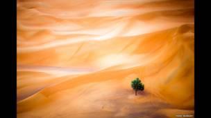 Тамарисковое дерево