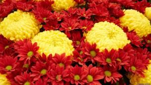 На выставке цветов в Хэмптон-корте. Фото Александра Баранова