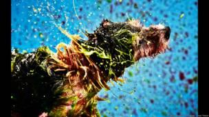 Para estimular a adoção de animais de estimação, transformou cachorros em pintores por um dia | Foto: Gabriel Morais, Alex Takaki e Lucas Tintori
