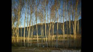 تأثير الوقت، أواخر الربيع، 2013-2014، سيمون نورفولك)