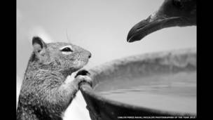"Finalistas do prêmio ""Wildlife Photographer of the Year"""