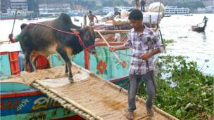 bangladesh_eidul_azha_preparations