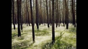 ब्रांडेनबर्ग के जंगल (2014)