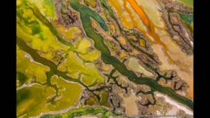 فن الطحالب