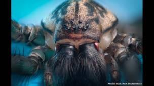 Фоторепортаж: насекомые, ищущие тепло рядом с нами - BBC News Русская служба