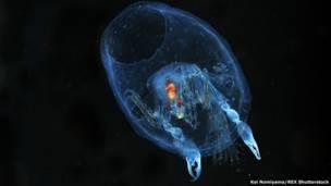 صورة لأحد سرطانات البحر