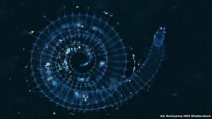 صورة رأسية لقنديل البحر