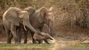 Спасение слоненка. Фото Francois Borman / Cater News