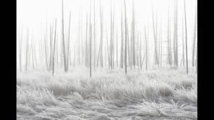 Национальный парк Йеллоустоун. Фото: Джеф Вануга.