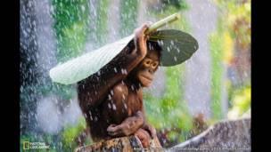"""""""إنسان الغاب تحت المطر""""، تصوير أندرو سوريونو."""