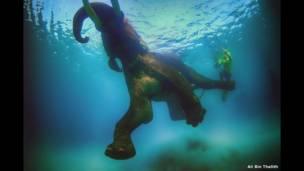 الفيل راجان يسبحقرب سواحل جزر أندامان، في الهند.