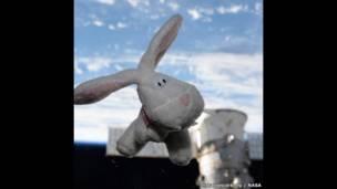 أرنب عيد الفصح