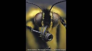 الفراشة خطافية الذيل - دانيل سوفتنر - مركز مايكروسكوبيك سوليوشنز