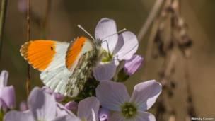 Бабочка-белянка (автор фото - Венди Коппер)