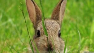 Кролик (автор фото - Молли Харвуд)