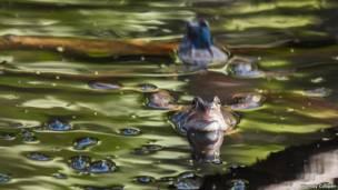 Лягушки (автор фото - Венди Купер)