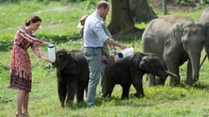 Герцог и герцогиня Кембриджские в национальном парке Индии Казиранга