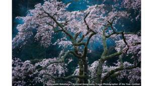 Fascination by Katsuyoshi Nakahara / National Geographic Travel Photographer of the Year Contest