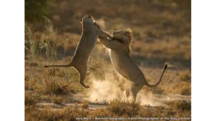 Moment of impact by Jaco Marx / National Geographic