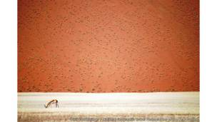 Namibian Desert by Doris Landertinger / National Geographic Travel Photographer of the Year Contest