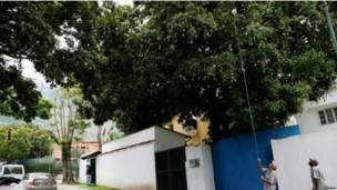 वेनेज़ुएला में आम का सीजन बिगड़ी आर्थिक स्थिति में राहत बना है.